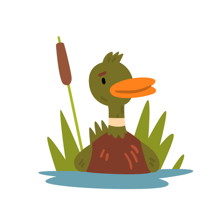Cute Funny Male Mallard Duckling Cartoon Character Swimming in Lake or Pond Vector Illustration Фото со стока - 117813169