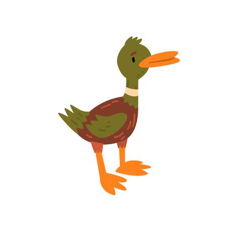 Cute Male Mallard Duckling Cartoon Character Standing Vector Illustration