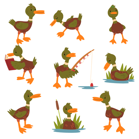 Cute Male Mallard Duck Set, Cute Funny Duckling Cartoon Character in Different Situations Vector Illustration