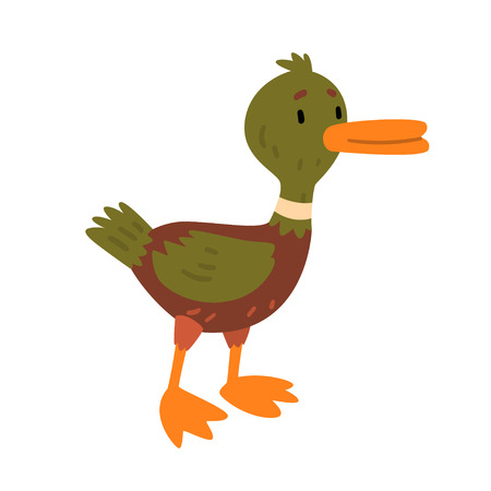 Male Mallard Duck, Cute Funny Duckling Cartoon Character Vector Illustration