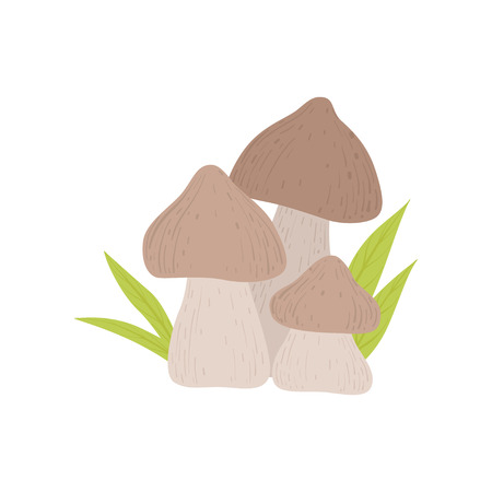 Forest Mushrooms, Wild Organic Product Vector Illustration on White Background.