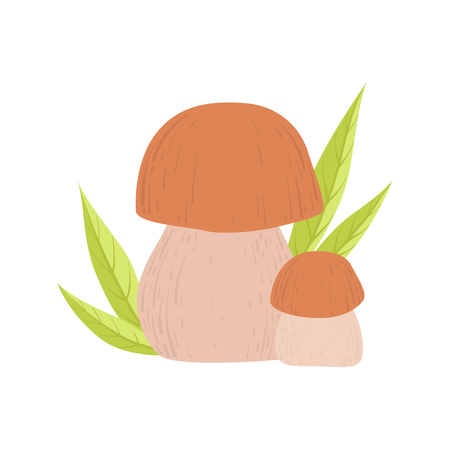 Forest Edible Cep Mushroom, Wild Organic Product Vector Illustration on White Background.