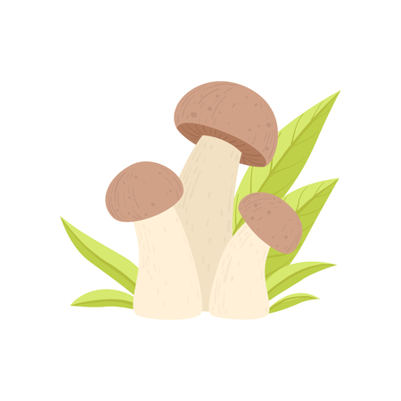 Forest Edible Mushroom Growing Grass, Wild Organic Product Vector Illustration on White Background. Illustration