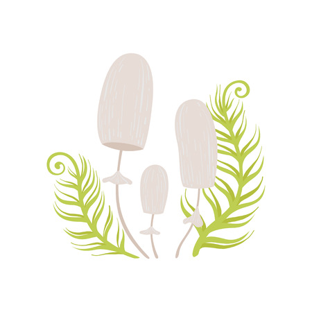 Forest Inedible Mushrooms and Green Growing Grass Vector Illustration on White Background.