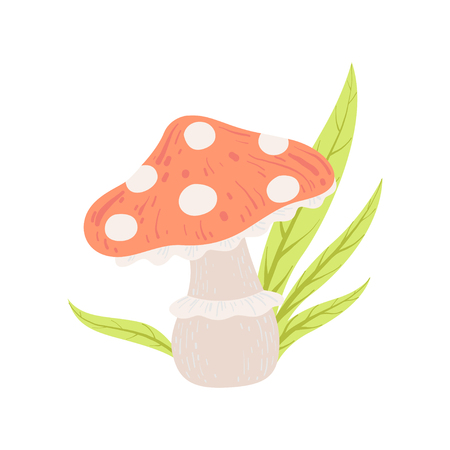 Amanita Muscaria Forest Mushroom, Fly Agaric Vector Illustration on White Background.