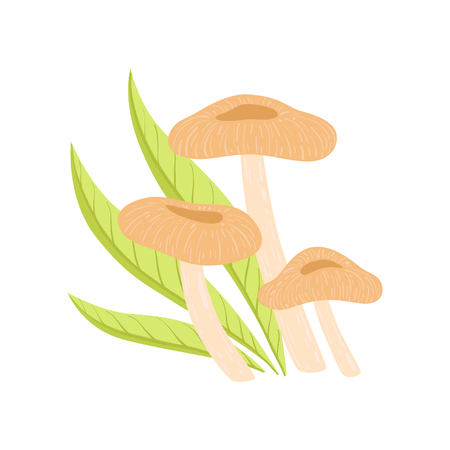 Forest Edible Coral Milky Cap Mushrooms, Wild Organic Product Vector Illustration on White Background.