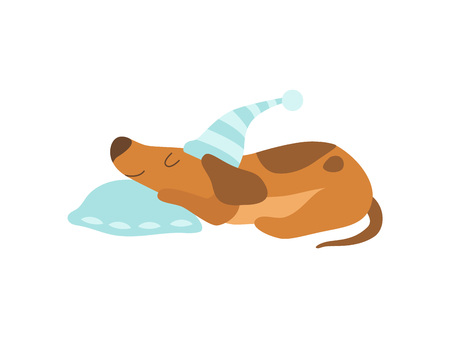Cute Dachshund Dog Animal Sleeping on Pillow Vector Illustration on White Background. 矢量图像