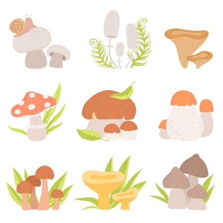 Différents types de champignons forestiers, champignons comestibles et non comestibles, illustration vectorielle de produits biologiques sauvages sur fond blanc.