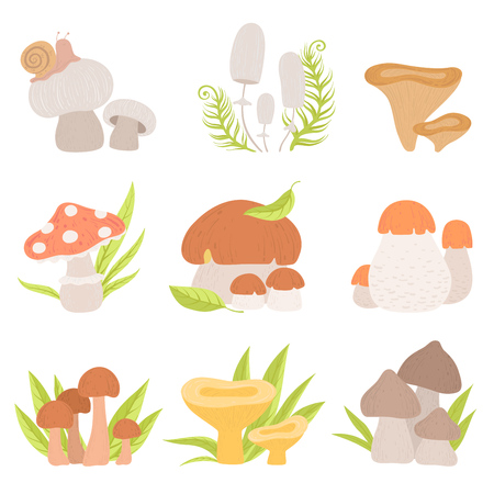 Different Kinds of Forest Mushrooms Set, Edible and Inedible Mushrooms, Wild Organic Products Vector Illustration on White Background.