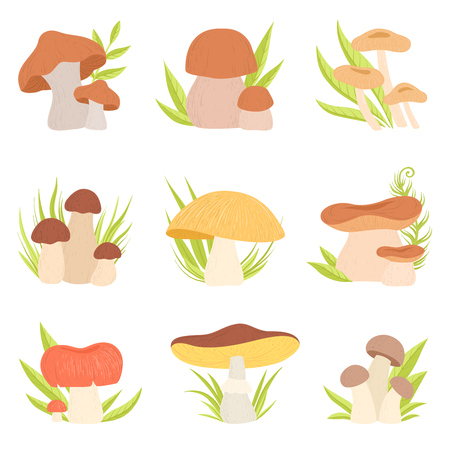 Different Kinds of Mushrooms Set, Forest Edible and Inedible Mushrooms, Eco Organic Products Vector Illustration on White Background.
