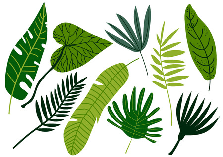 Tropical Leaves Set, Exotic Jungle Green Palm Tree Leaves Vector Illustration on White Background.