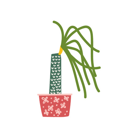 Dracaena House Plant Growing in Pot, Design Element for Natural Home Interior Decoration Vector Illustration on White Background.