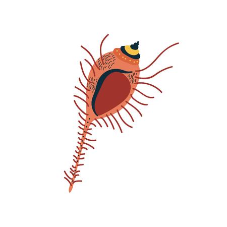 Tropical Marine Underwater Aquatic Seashell Vector Illustration