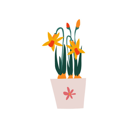 Spring Daffodils Flowers in Flowerpot, Beautiful Potted Plant Vector Illustration on White Background. Illustration