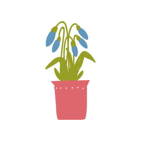 Spring Snowdrops Flowers in Flowerpot, Beautiful Potted Plant Vector Illustration on White Background.