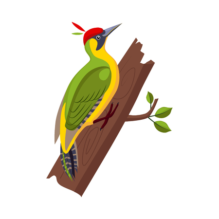 Yellow Wagtail. Funny Alphabet, Colourful Animal Vector Illustration