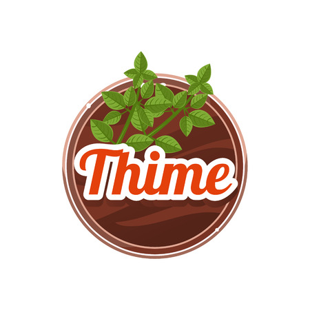 Thime Spice. Vector Illustration.