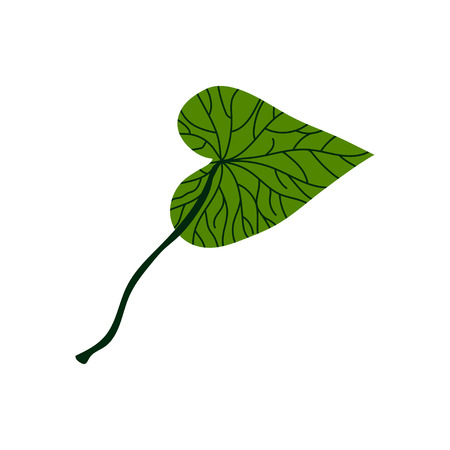 Green Leaf of Tropical Tree, Botanical Design Element Vector Illustration on White Background.