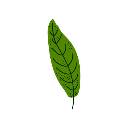 Leaf of Tropical Tree, Botanical Design Element Vector Illustration on White Background. Ilustração