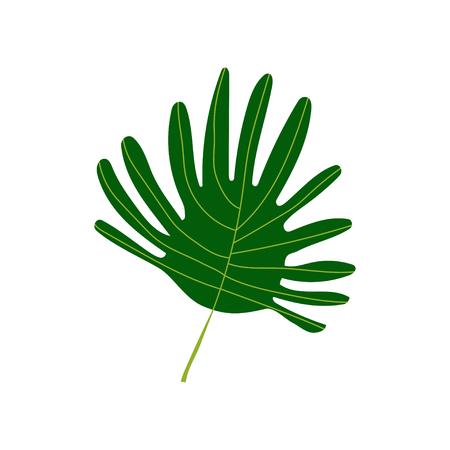 Tropical Palm Leaf, Exotic Botanical Design Element Vector Illustration