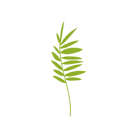 Tropical Feathery Palm Leaf, Botanical Design Element Vector Illustration