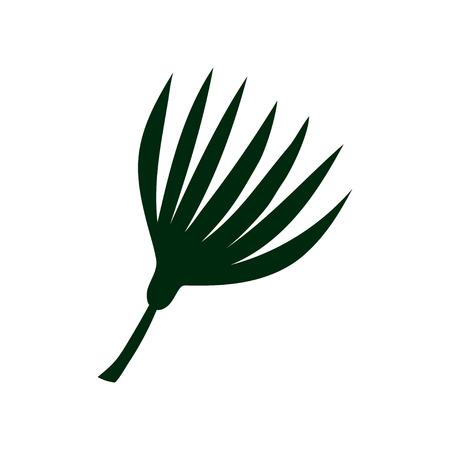 Tropical Talipot Palm Leaf, Botanical Design Element Vector Illustration on White Background.