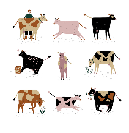 Cows of Different Breeds Set, Cattle Breeding, Farming, Dairy Cattle, Vector Illustration