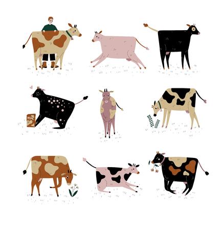 Vaches de différentes races, élevage de bovins, élevage, bovins laitiers, illustration vectorielle