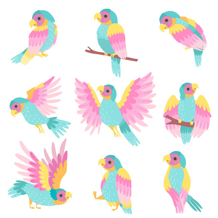 Collection of Tropical Parrots in Different Poses Vector Illustration on White Background.
