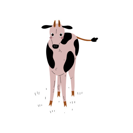 Spotted Cow, Front View, Dairy Cattle Animal Husbandry Breeding Vector Illustration on White Background.