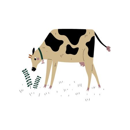 Spotted Cow Grazing on Meadow, Dairy Cattle Animal Husbandry Breeding Vector Illustration on White Background. Çizim