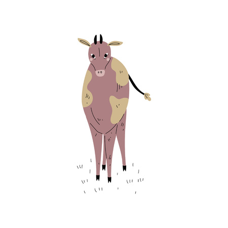 Cute Spotted Cow, Front View, Dairy Cattle Animal Husbandry Breeding Vector Illustration on White Background. Illustration
