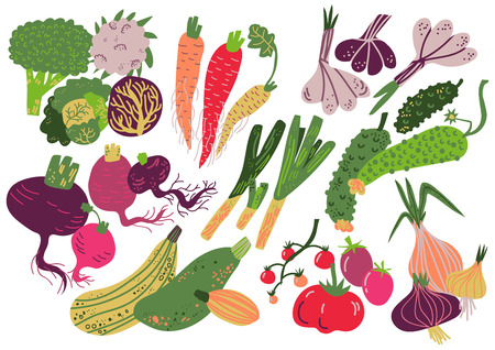Vegetables Set, Healthy Nutrition Food, Carrot, Onion, Garlic, Cucumber, Cabbage, Tomato Broccoli Beet Radish Zucchini Vector Illustration on White Background