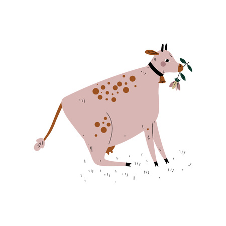 Cow Chewing Grass, Dairy Cattle Animal Husbandry Breeding Vector Illustration on White Background.