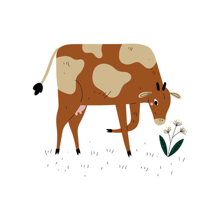 Brown Spotted Cow Grazing on Meadow, Dairy Cattle Animal Husbandry Breeding Vector Illustration on White Background.