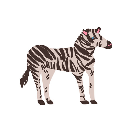 Zebra Wild Exotic African Animal Vector Illustration on White Background. Ilustração