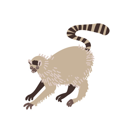 Lemur Wild Exotic African Animal Vector Illustration