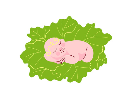 Newborn Baby Sleeping on Fresh Green Cabbage Leaves Vector Illustration on White Background.