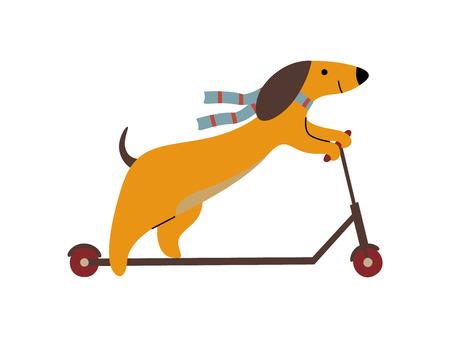 Purebred Brown Dachshund Dog Riding Kick Scooter, Funny Playful Pet Animal Cartoon Character Vector Illustration