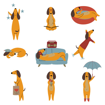 Collection of Purebred Brown Dachshund Dog, Friendly Funny Playful Pet Animals Cartoon Characters in Different Situations Vector Illustration Illustration