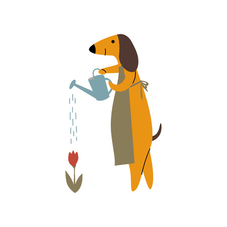 Purebred Brown Dachshund Dog Watering Flowers with Watering Can, Funny Playful Pet Animal Cartoon Character Vector Illustration