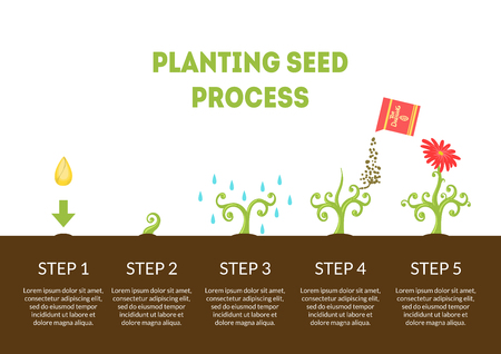 Planting Seed Process Banner, Stages of Growth of Flower from Seed, Timeline Infographic of Planting Garden Flower Vector Illustration 向量圖像