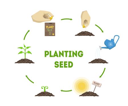 Piantare lo striscione del seme, fasi di crescita della pianta dall'illustrazione vettoriale infografica della cronologia del seme Vettoriali