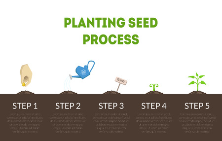 Planting Seed Process Banner, Stages of Growth of Plant from Seed, Cycle of Growth of Garden Plant Vector Illustration