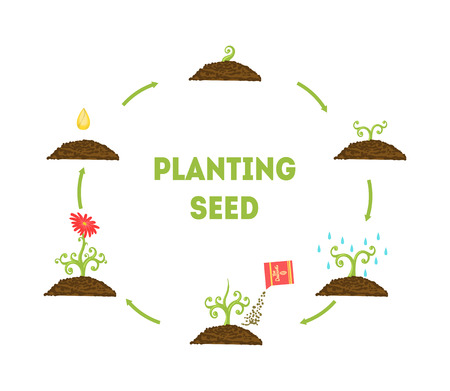 Banner de semillas de plantación, etapas de crecimiento de la flor a partir de la semilla, infografía de línea de tiempo de la ilustración de vector de plantación de flores de jardín
