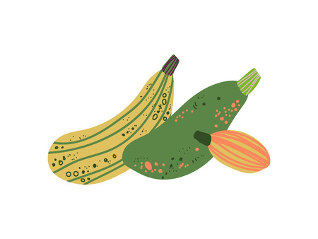 Different Zucchini Varieties Fresh Vegetable, Organic Nutritious Vegetarian Food for Healthy Diet Vector Illustration on White Background.