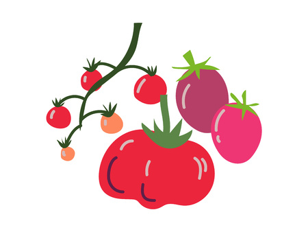 Different Tomato Varieties Fresh Vegetable, Organic Nutritious Vegetarian Food for Healthy Diet Vector Illustration on White Background.