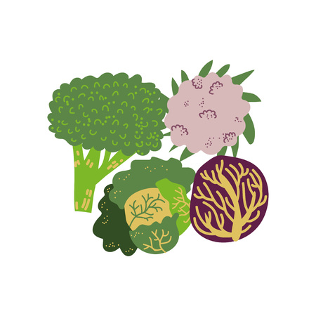 Different Cabbage Varieties Fresh Vegetable, Organic Nutritious Vegetarian Food for Healthy Diet Vector Illustration on White Background.