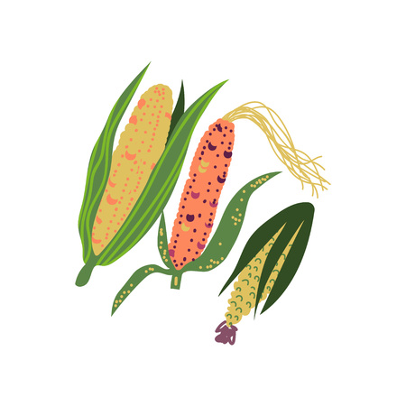 Corn Varieties Fresh Vegetable, Nutritious Vegetarian Food Vector Illustration on White Background.