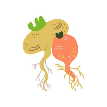 Turnip Varieties Fresh Vegetable, Organic Nutritious Vegetarian Food for Healthy Diet Vector Illustration